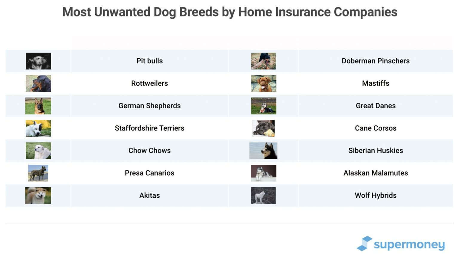 How to Find Renters and Home Insurance That Covers Dogs ...